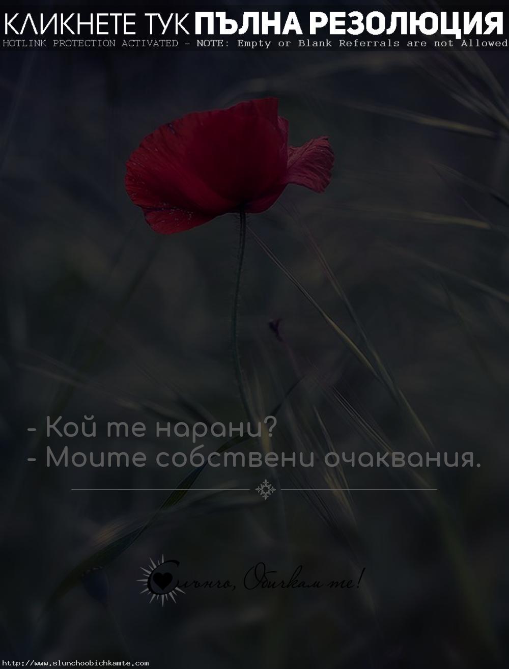 Кой те нарани? Моите собствени очаквания - Любов, любовни мисли, статуси, цитати, фрази, обич, разочарование, раздяла, фалшиви хора, наранена, червен мак, обичам те, очаквам прекалено много, изневяра, вяра, честност, искреност, лъжи, предателство, зарязване, счупено разбито сърце, не трябва да очакваме нищо от никой, очаквах прекалено много, несподелена любов, невъзможна любов