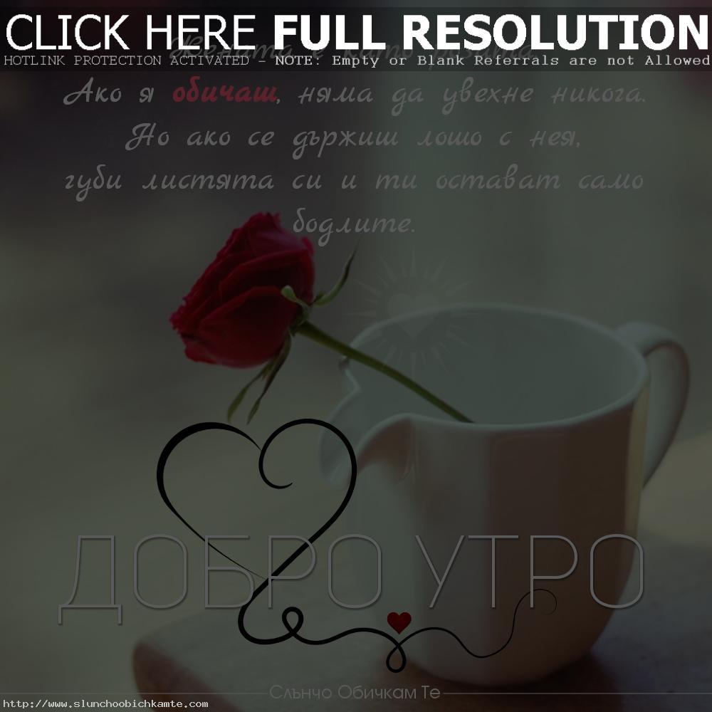 Пожелания за добро утро - Добро утро! Жената е като розата. Ако я обичаш няма да увехне никога. Но ако се държиш лошо с нея, губи листята си и ти остават само бодлите. - Хубав ден, слънчев ден, позитивен ден, щастлив ден, добро утро приятели