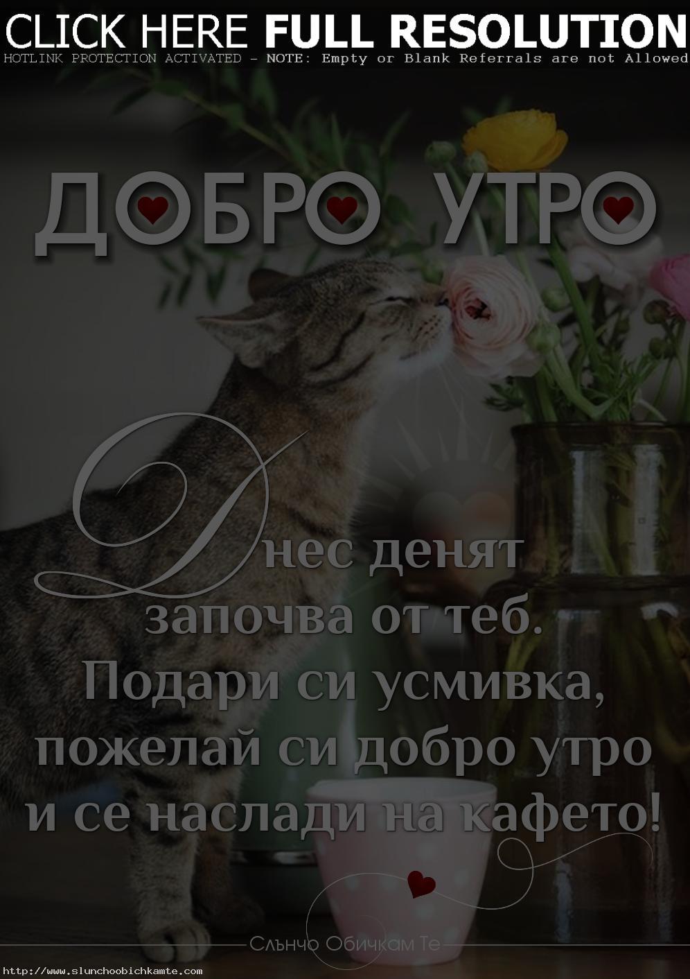 Пожелай си Добро утро, пожелания за добро утро, хубав ден, усмихнат ден, приятен ден, щастлив ден, подари и усмивка, добро утро приятели, виртуално добро утро, добро утро в неделя - Добро утро! Днес денят започва от теб. Подари си усмивка, пожелай си добро утро и се наслади на кафето