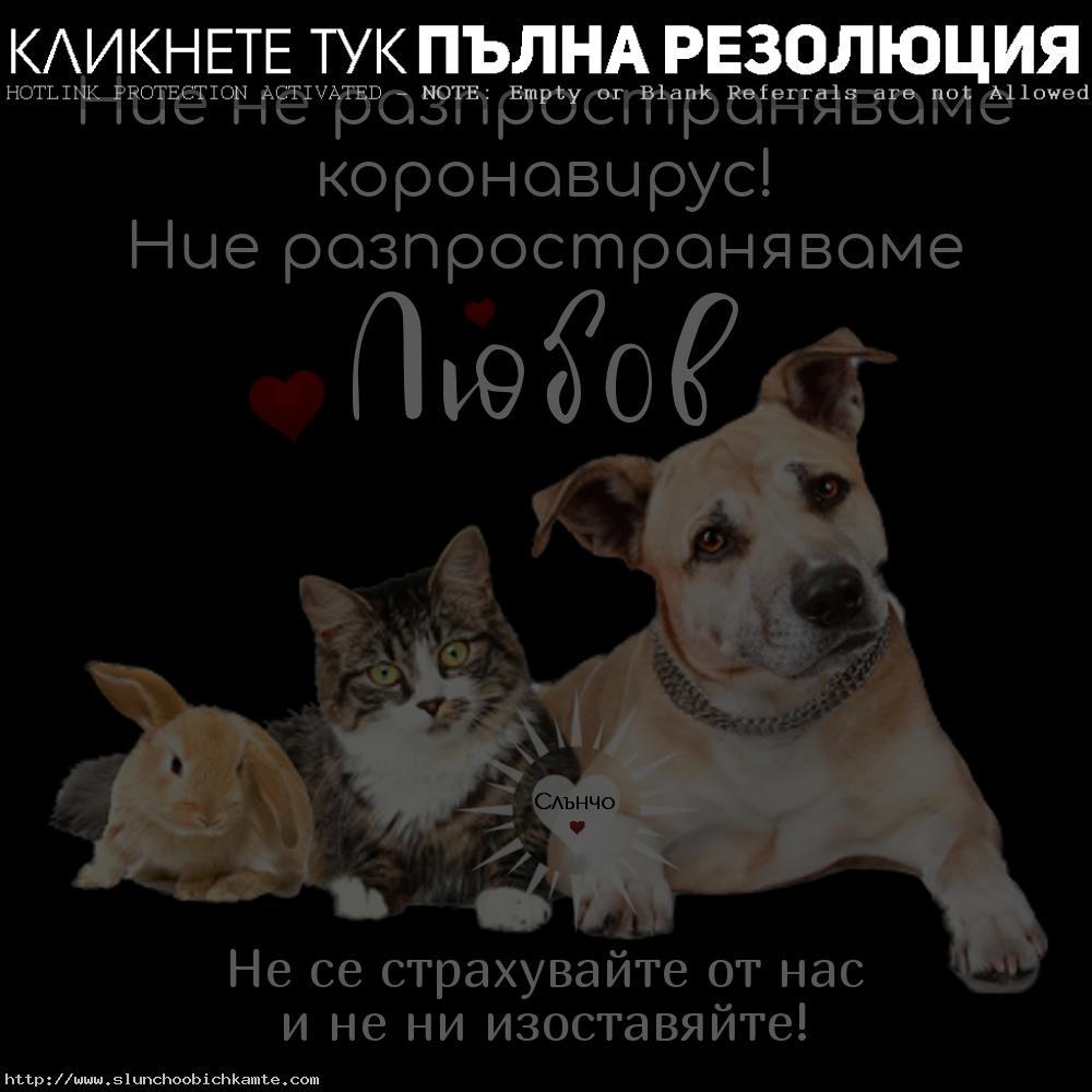 коронавирус домашни любимци - кучета, котки, зайци, животни, не предават коронавирус, не са опасни, не ги изоставяйте