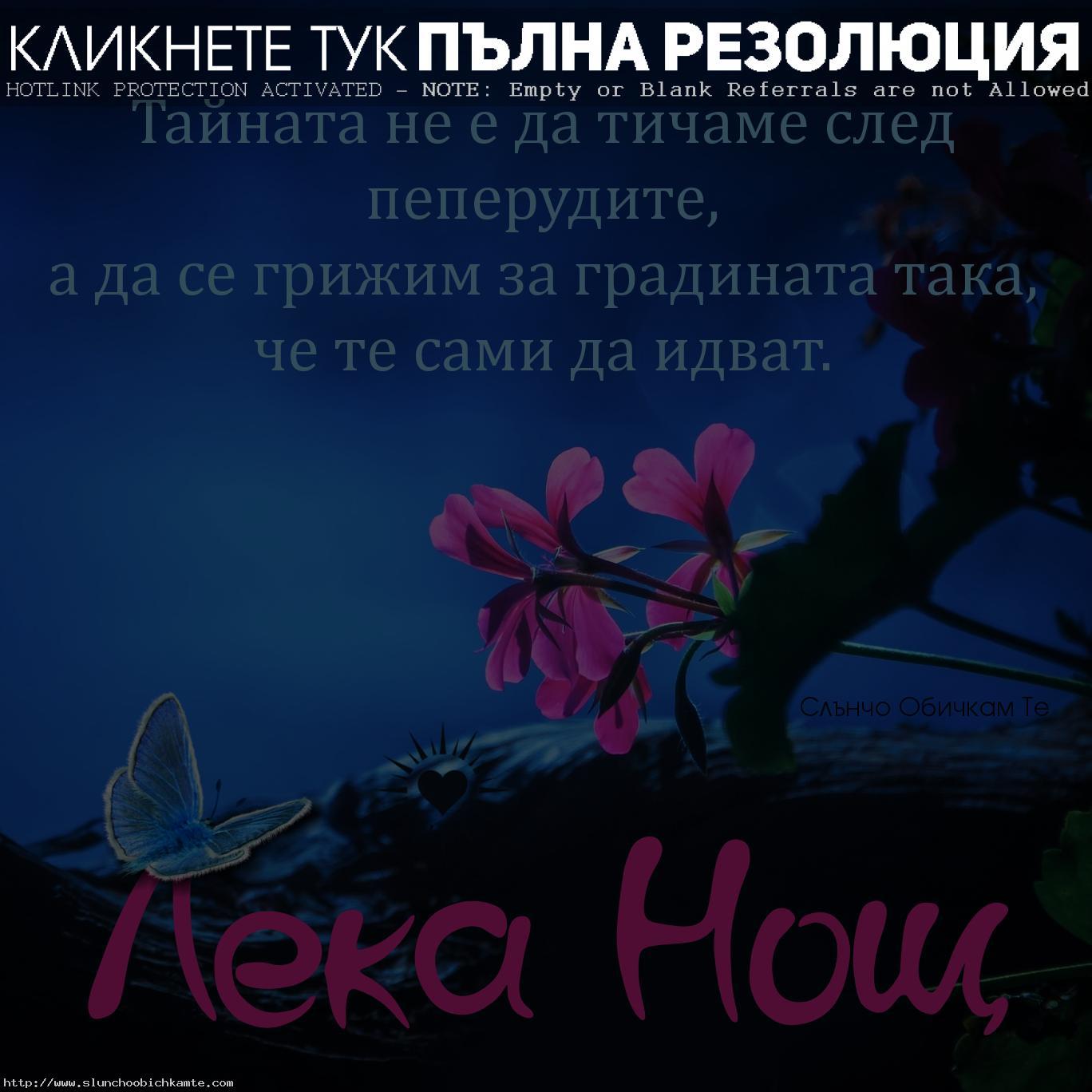 Тайната не е да тичаме след пеперудите, а да се грижим за градината така, че те сами да идват. Лека нощ! - Картички с пожелания, цитати и мъдри мисли за лека нощ, сладки сънища, спокойна нощ с цветя и пеперуда