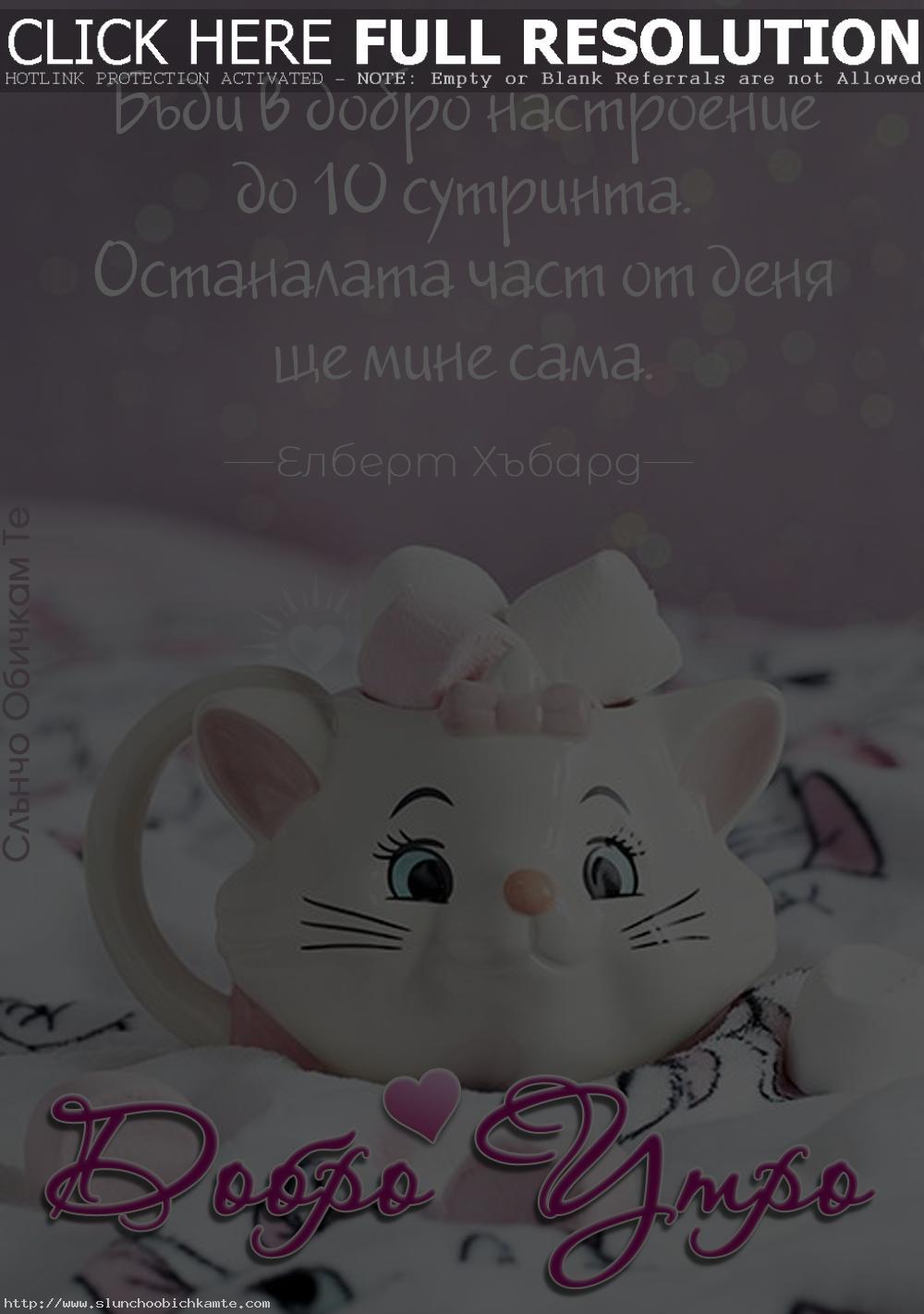 Добро утро с цитат на Елберт Хъбард - Пожелания за добро утро, чаша с коте